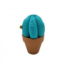 Cactus Turquesa